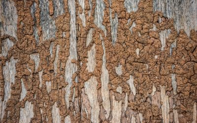 The Best Ways to Prevent Termites in the Home
