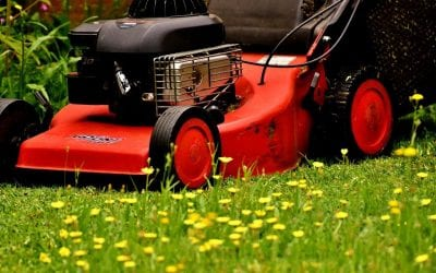Tips to Maintain Your Lawn this Summer